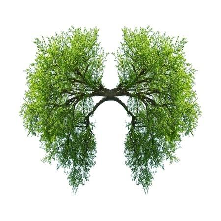 Lungerne og T4