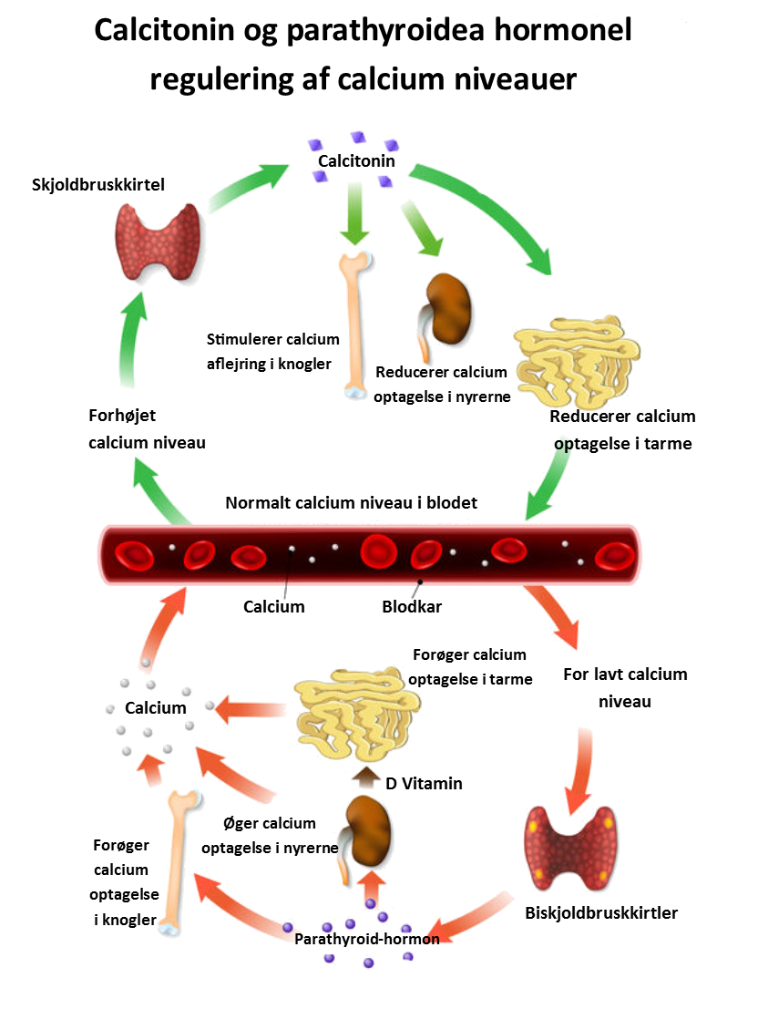 symptomer på for lavt blodtryk