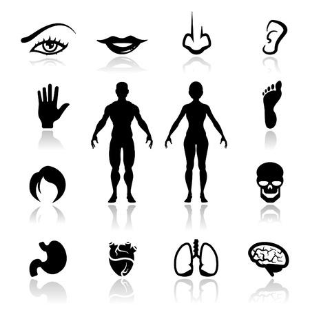 Hormonernes kommunikation, hvordan virker vi