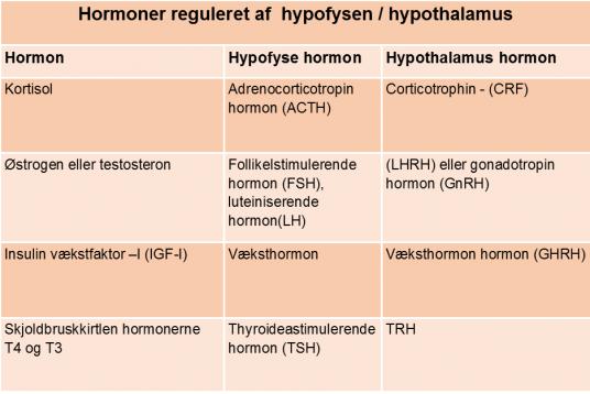 hormonerendokrine hypoth